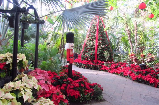 Buffalo And Erie County Botanical Gardens: Christmas Among Tropical Plants  And Trees