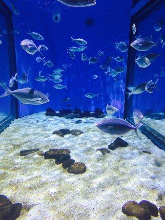 L aqu rium de barcelona picture of l aquarium de for Aquarium de barcelona