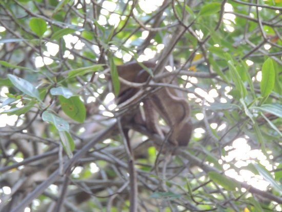 St. Ann's, Trynidad: Snake in Mangrove