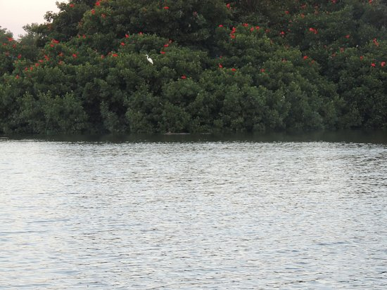 St. Ann's, Trinidad: Scarlet Ibis