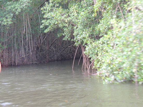 St. Ann's, Trinidad: Caroni Swamp
