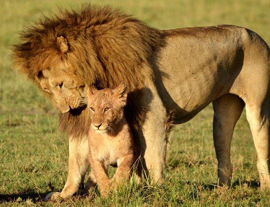 Ndovu Safaris