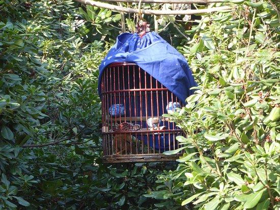 Jiefang Park : Singing bird