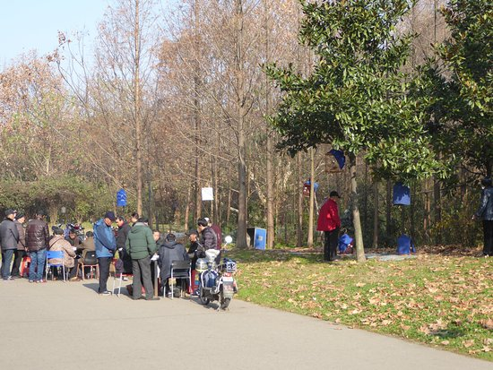 Jiefang Park : Cards while the birds sing