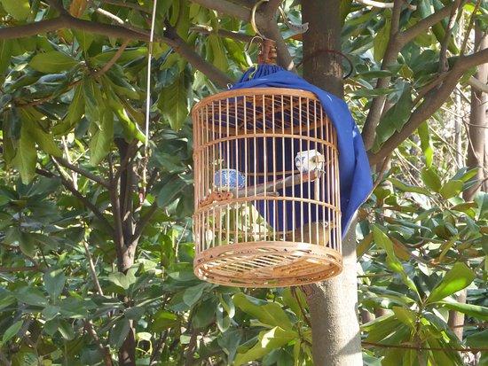 Jiefang Park : Bird singing