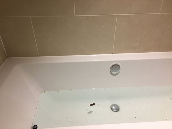 Staycity Aparthotels West End: Picture of dirty bath tub given to us