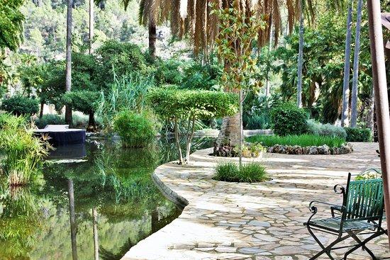 Plan d 39 eau des jardins de alfabia photo de jardins de for Jardines alfabia