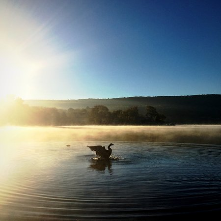 Geese on greenwood lake at sunrise