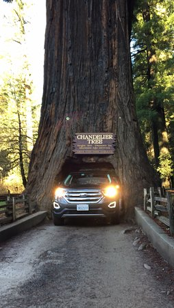 Chandelier Tree - Picture of Chandelier Drive-Through Tree ...