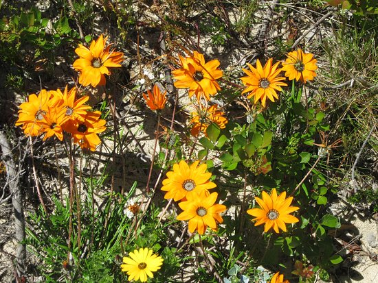 Richtersveld Transfrontier National Park, Sudáfrica: Flowers in bloom