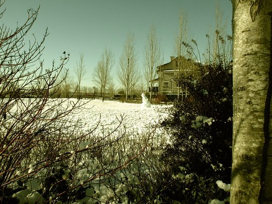 Pitt Meadows, Canada: Frosty in the Park