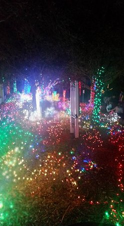Holiday lights 2017 picture of florida botanical gardens - Largo botanical gardens christmas lights ...