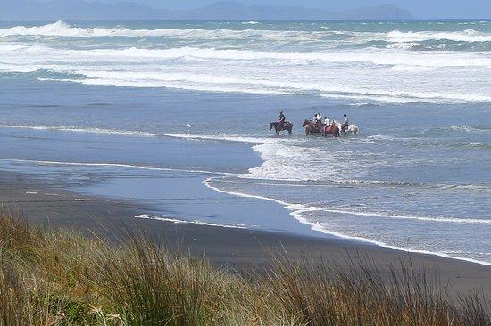Ruapuke Beach: Horsing around