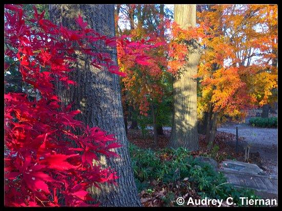 Albertson, Nowy Jork: Beautiful fall foliage at Clark Botanic Garden.