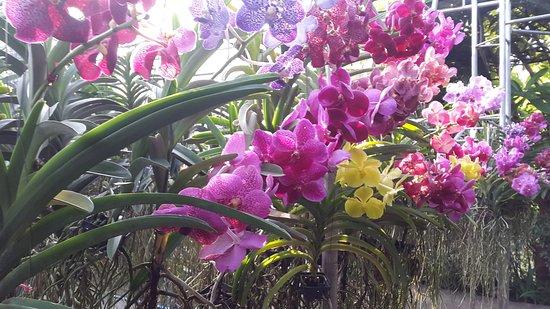 Mae Sa Orchid Farm: ferme orchidee mae sa