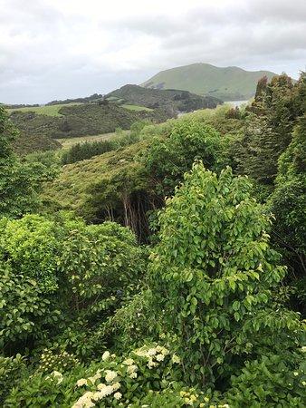 Hereweka Garden Retreat: photo0.jpg