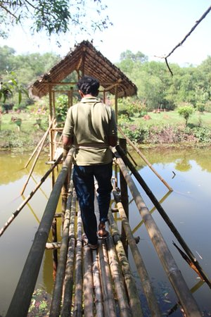 Tirur, Indien: Mr Noor Mohammed leading the way over the bamboo walkway
