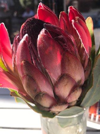 Hermanus, Sudáfrica: photo2.jpg