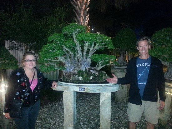 Fort Pierce, FL: Loving this bonsai that has been growing since 1970 something