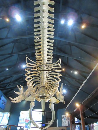 Hermanus, Sudáfrica: Whale skeleton