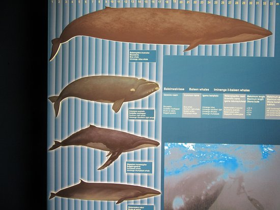 Hermanus, Sudáfrica: Whale Identification