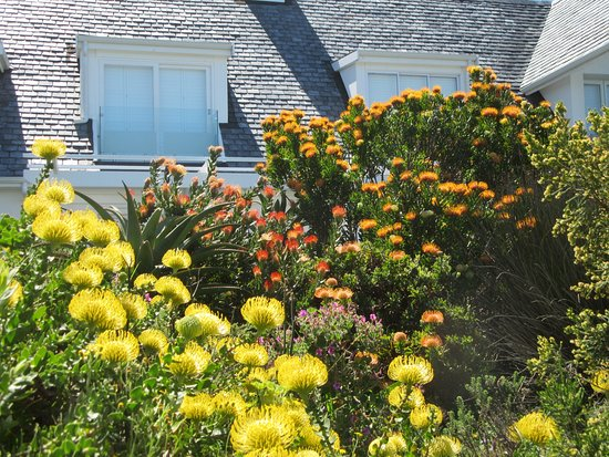 Hermanus, Sudáfrica: Houses along the trail also are enjoyable to view