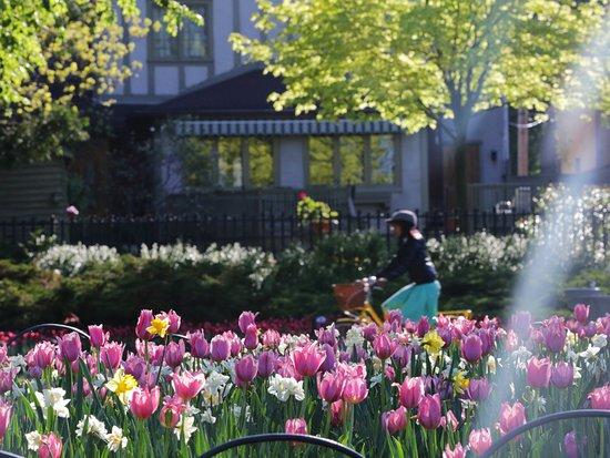 Canadian Tulip Festival - Ottawa Tourism