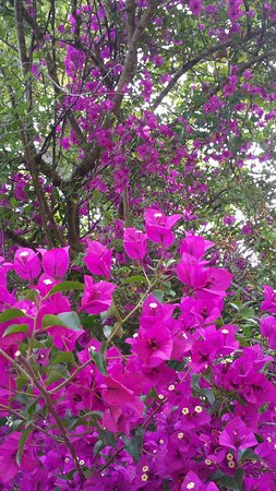 Bougainvillea and a haven of tropical and African plants, trees, flowers and faunas.