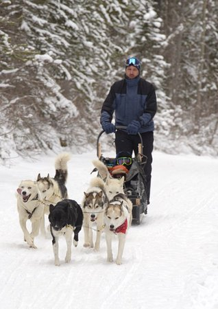Snowy Owl Sled Dog Tours: Me, a first time musher driving the team