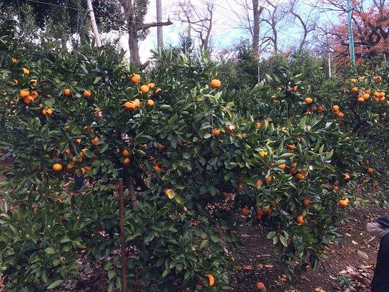 Kamago Orange Park
