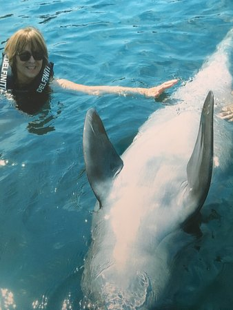 Delfiniti : playing with dolphin