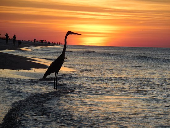 Gulf Shores Plantation: Sunrise on a secluded beach.