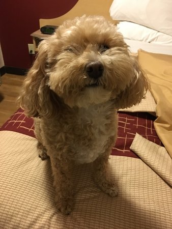Red Roof Inn Erie: Pet friendly hotel!