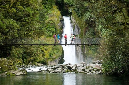 Half-Day Milford Track Guided Hiking...