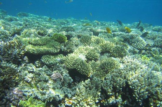 Buceo desde la costa en Sharm el...