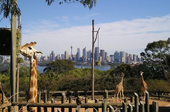 Excursion au zoo de Taronga à Sydney...