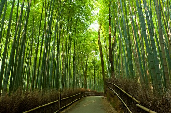 Arashiyama and Sagano Morning Walking...