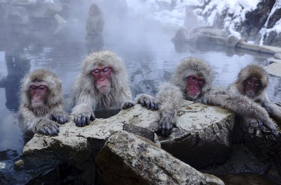 Nagano Tour from Tokyo with Zenko-ji Temple and Snow Monkeys