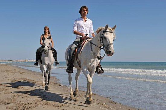 Paseo a caballo en Los Cabos