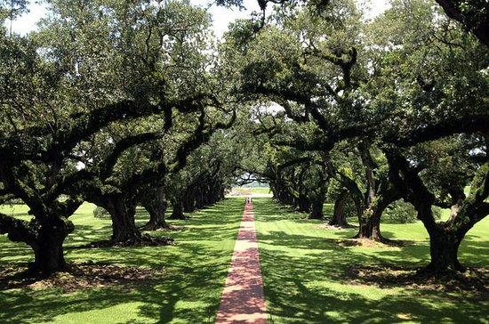 Oak Alley and Laura Plantation Tour from New Orleans