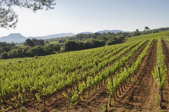 Provence Private Wine-Tasting Tour...