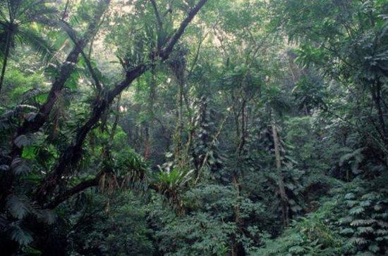 Rio de Janeiro Botanical Garden and...