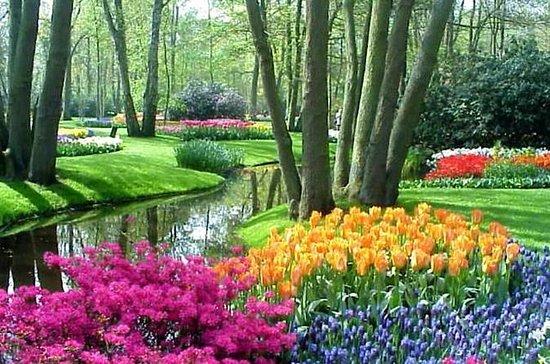 Keukenhof Tulip Gardens Trip and...