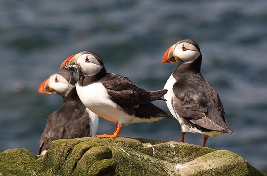 Wildlife Cruise from John O'Groats
