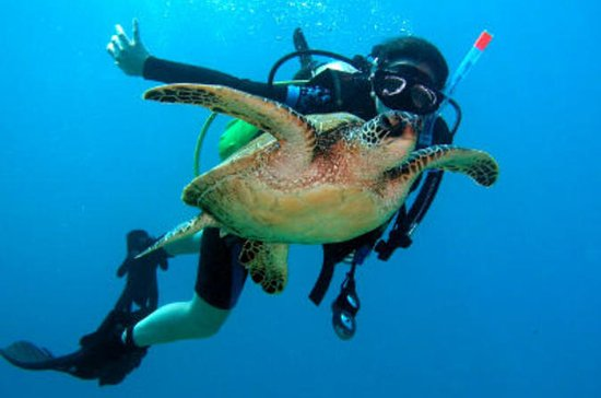 Scuba Diving for Beginners on the ...