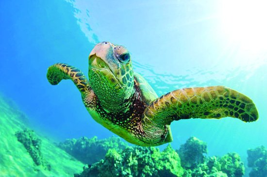 Turtle Canyon Snorkel Cruise by ...
