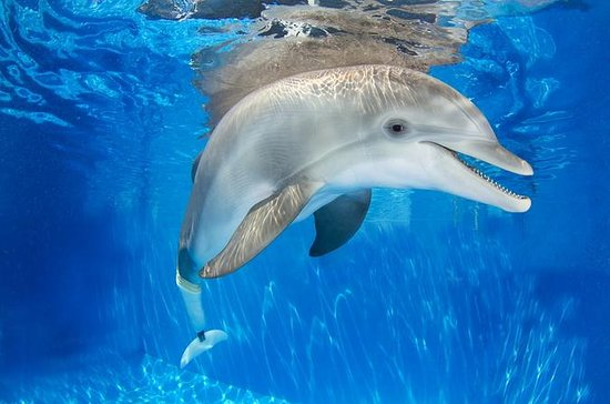 Clearwater Marine Aquarium Day Trip...