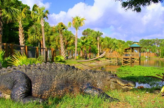 Wild Florida Wildlife Park and Airboat Tour from Orlando