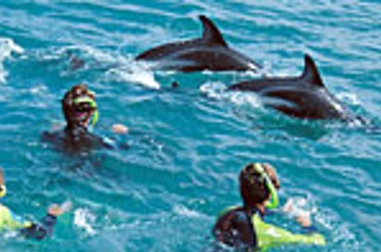 Kaikoura 12-Hour Dolphin Cruise from...