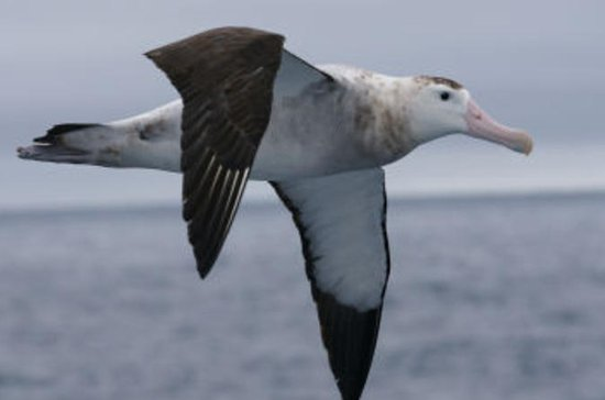 Kaikoura Albatross Encounter Tour
